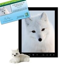 Adopt an Arctic Fox