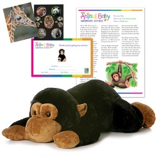 Adopt a Baby Chimpanzee