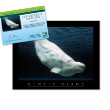 Adopt a Beluga Whale