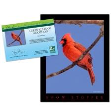 Adopt a Northern Cardinal