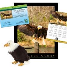 Adopt a Bald Eagle