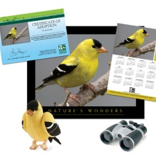 Adopt an American<br> Goldfinch