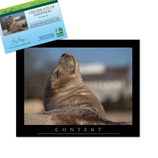 Adopt a Harbor Seal