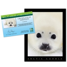 Adopt a Harp Seal