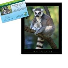 Adopt a Lemur