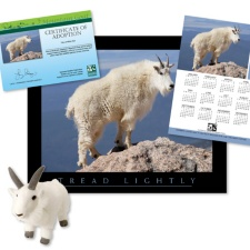 Adopt a Mountain Goat