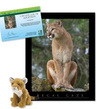 Adopt a Mountain Lion