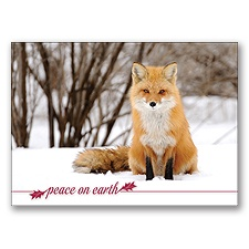 Fox in Snow Card
