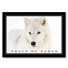 Arctic Wolf Card