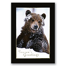 Snowy Grizzly Card