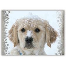 Snowy Retriever Card