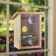 Window View Nest Birdhouse