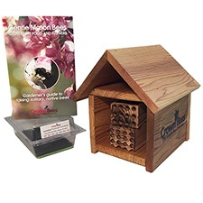 Spring Bee Cabin
