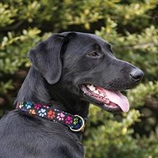 Paws Design Dog Collar