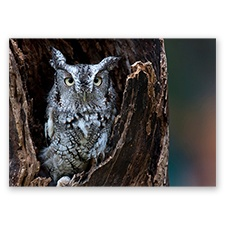 Trees for Wildlife Card - Owl