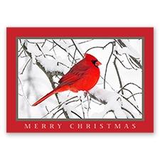 Trees for Wildlife Card - Cardinal