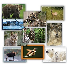 Wildlife Blank Assortment