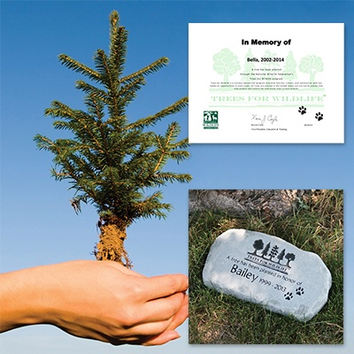 Pet Memorial Tree Sponsorship and Stone