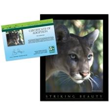 Adopt a Florida Panther
