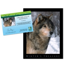 Adopt a Gray Wolf